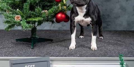 24.12.2020 Москва, Выставки собак для третьей группы FCI
