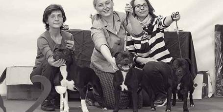 21.10.2018, Москва, всепородная выставка собак, эксперт Пол Стенвей (Великобритания)