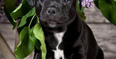 Выбор щенка, уход за собакой, особенности содержания