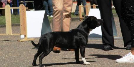 10.06.2018 Калининград, всепородная выставка собак