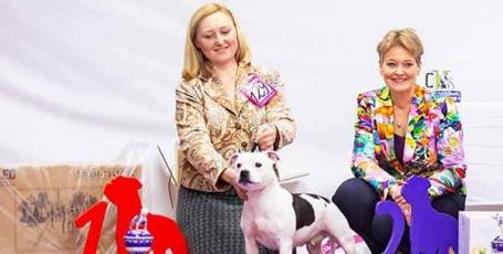 30.03.2019, Москва, всепородная выставка собак, эксперт Bianca Janssen (Голландия)